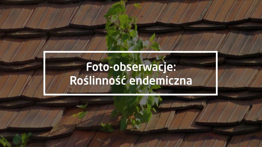 """Foto-obserwacje: """"Roślinność endemiczna"""""""