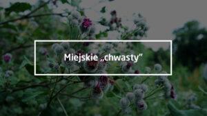 """Miejskie """"chwasty"""""""